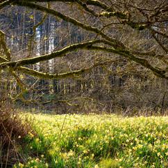 Hike-Narcissus-1-d.jpg