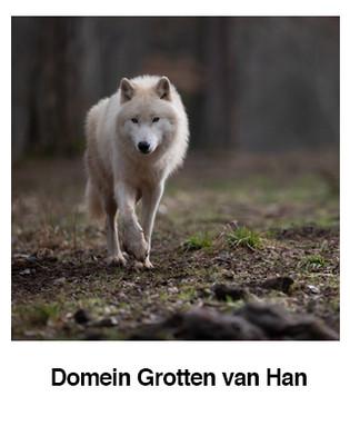 Domein-Grotten-van-Han.jpg