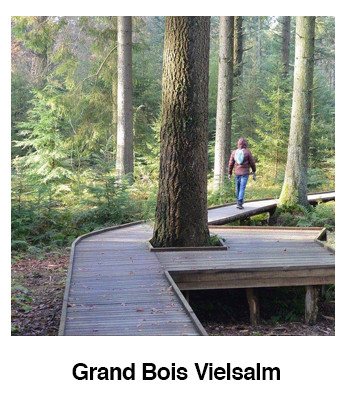 Grand-Bois-Vielsalm.jpg