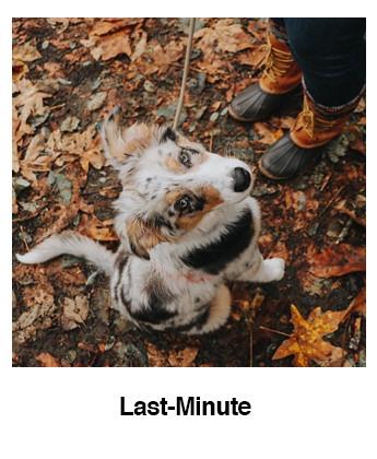 Last-Minute Ardennen