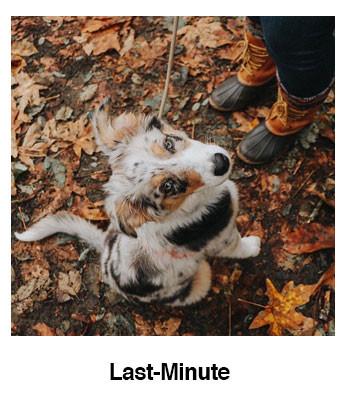 Last-Minute.jpg