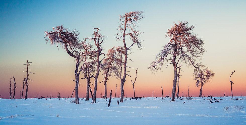 Noir Flohay Winter.jpg