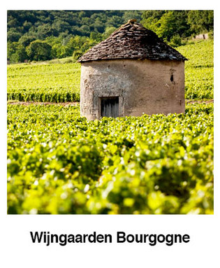 Wijngaarden-Bourgogne.jpg
