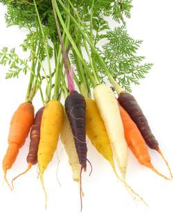 carotte botte couleur