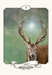 cards_final_frame_ribbon_long12.54.jpg