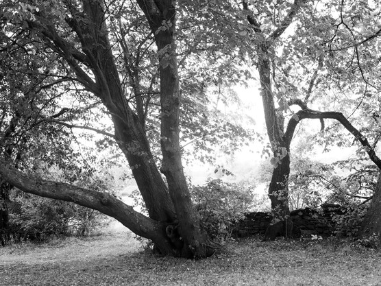 Crooked. Gnarled. Bent in odd places.