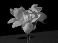 Still Life | Orchid