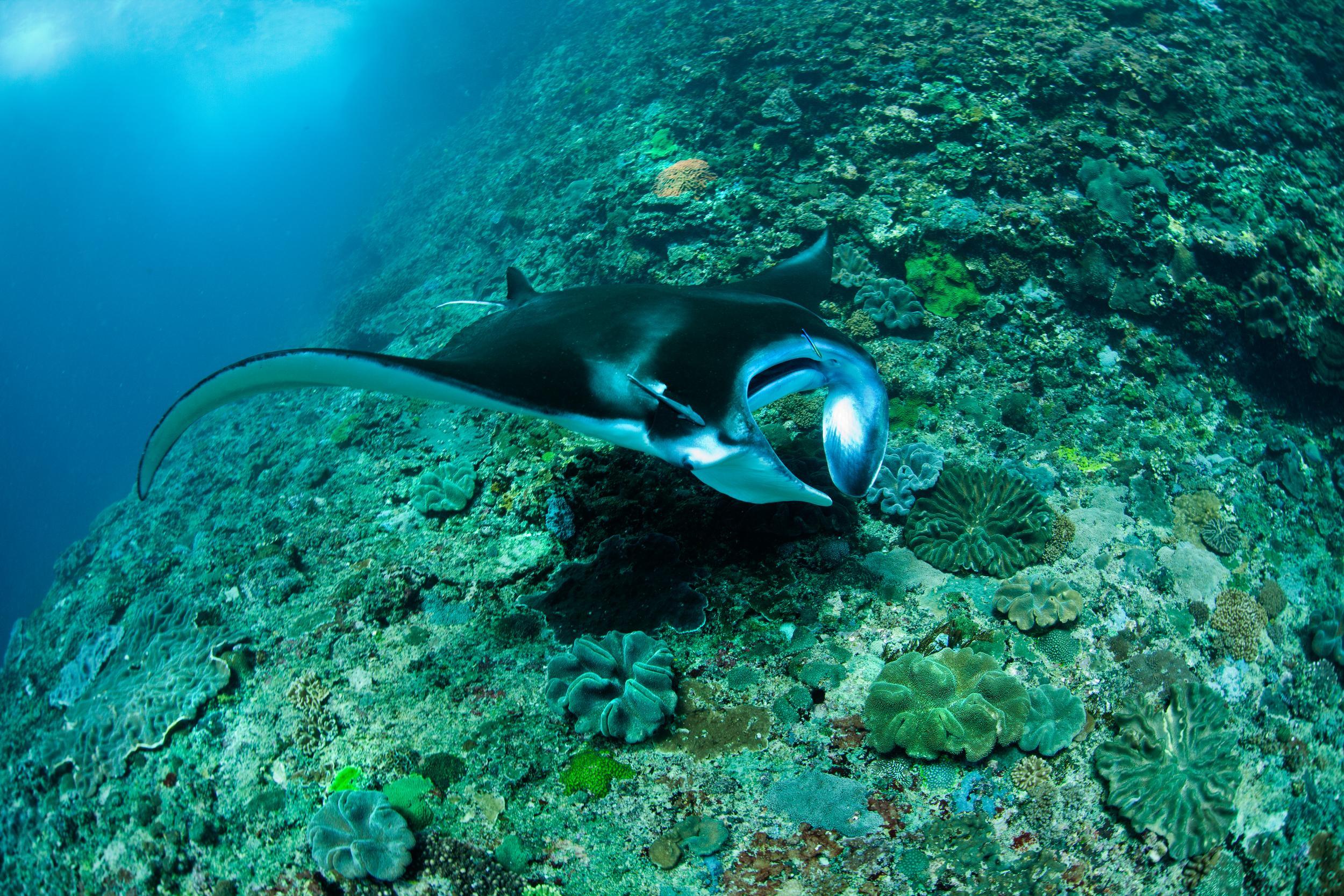 המאבק להצלת האוקיינוסים