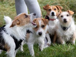 Summer Puppy Meet-Up To Celebrate Their First Birthday!