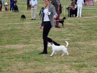 Qualified For Crufts 2019!