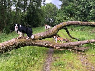 Dog Walking Holiday: Wiltshire