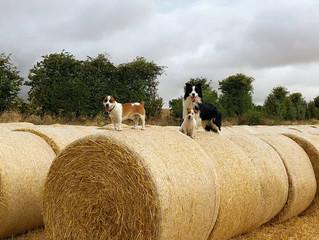 Harvest Fun