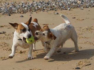 Beach Fun - Dog Friendly Holidays