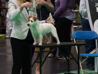 Our First Crufts!