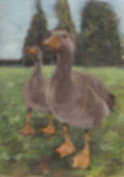 CanadianGoose.jpeg