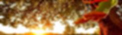 banner3ang.jpg