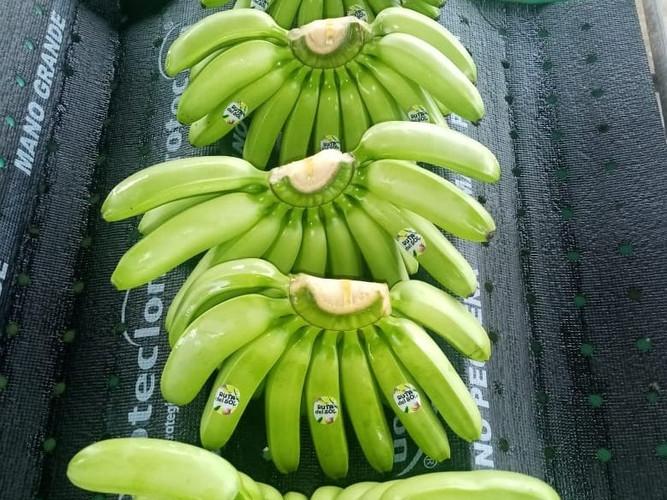 mini banana.jpg