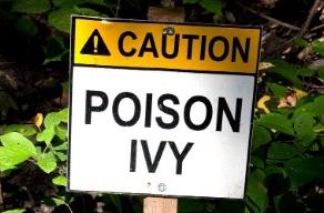 Plant Safety: Poisonous Plant Basics