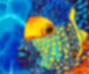 Jean-Baptiste Hand Painted silk art of an angelfish