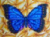 BlueMorpho&Frangipani.jpg