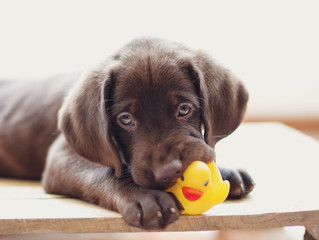 What to Know If You Plan to Bring Home a Pandemic Puppy
