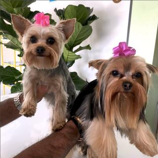 san fernando valley dog groomer