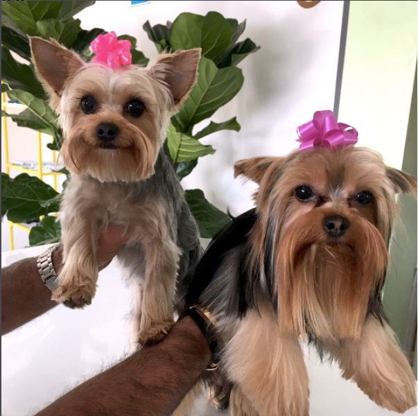 san fernando valley dog groomer