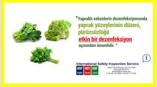 Yapraklı Sebzelerin Dezenfeksiyonu