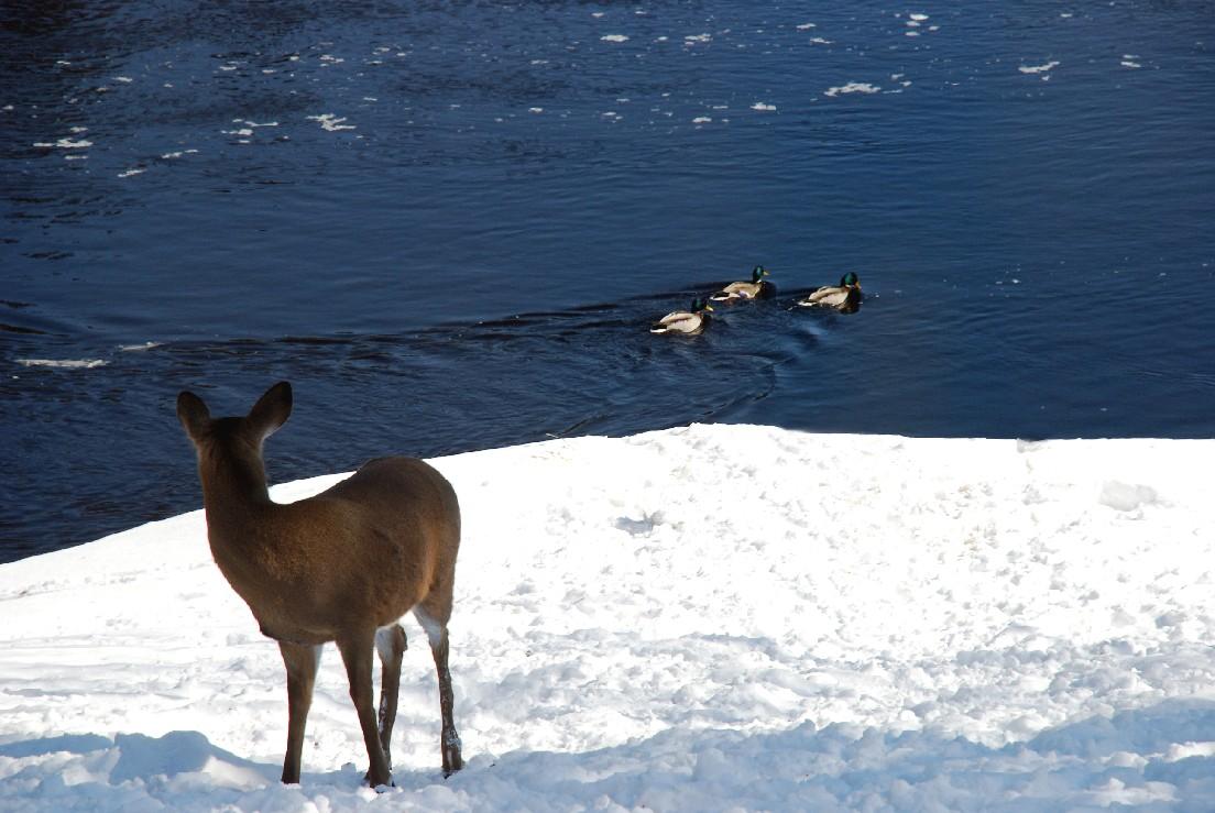 Observation animaux et oiseaux