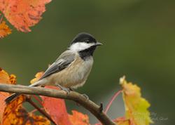 oiseaux (112)