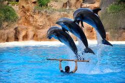 Дельфинарий-в-Сочи-1068x709