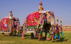 kartinki24_elephants_7000