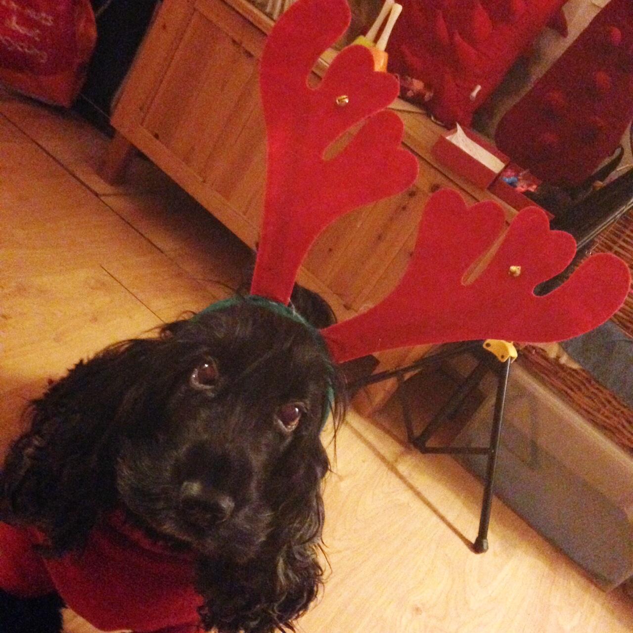Reindeer Sasha.JPG