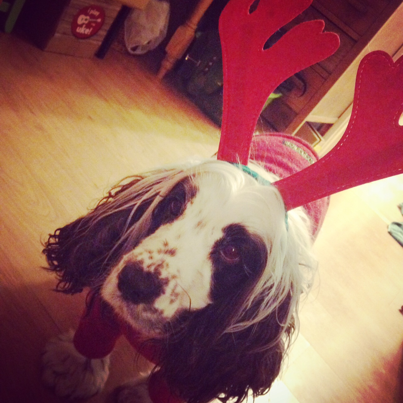 Reindeer Coco .JPG