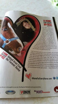 A Home for Every Horse article.jpeg