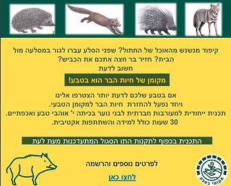 מעורבות עם חיות.JPG