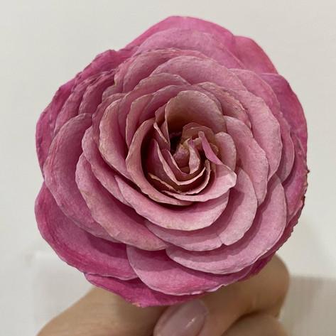 Spray Rose in Pink