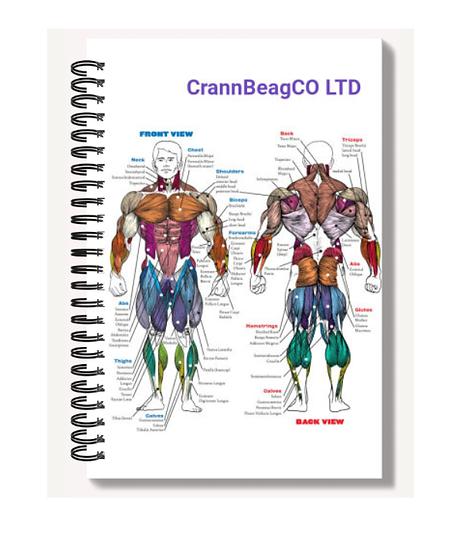 High Gloss A6 Notebook: Muscular System