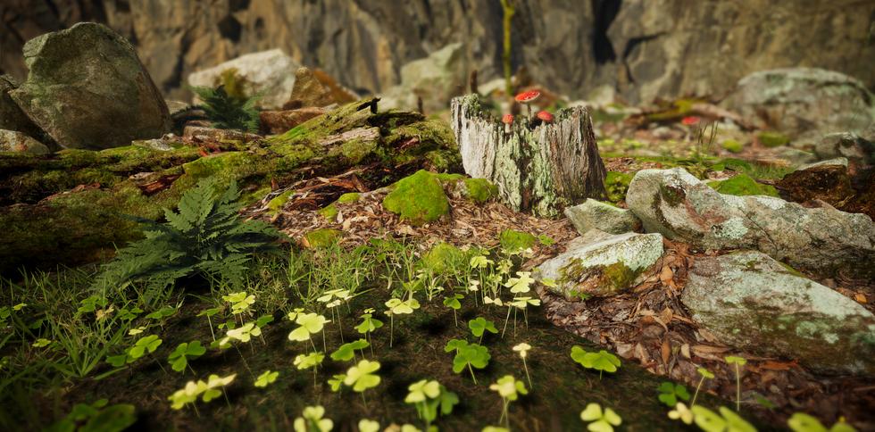 Forest Undergrowth
