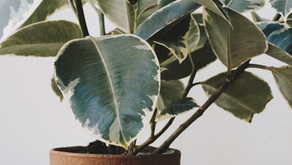 The Delights of Houseplants: Why they are more than just beautiful