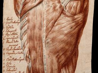 Update - Artistic Anatomy