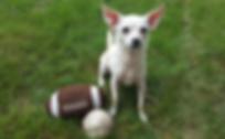 Most Valuable Pup   Dog Walking   Burlington, MA