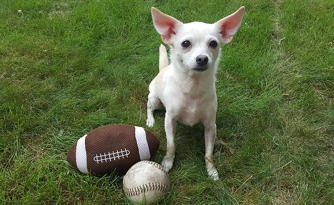 Most Valuable Pup | Dog Walking | Burlington, MA