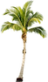 palm-tree-png-tropical-palm-tree-png-339
