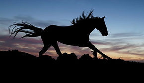 cropped-Stallion-Horse-Shadow-Gallop-Exp