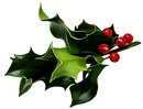 holly-and-ivy-png--1121.png