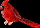 Cardinal_Bird_PNG_Clip_Art.png