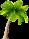 Palm_Transparent_PNG_Image.png
