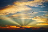 bird-flying-in-the-sky-with-evening-ligh