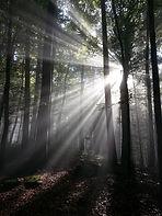 Sunshine Tree.jpg